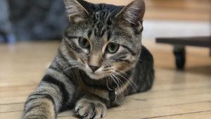 Meet our store cat, Flynn