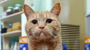 Meet our store cat, Wanda